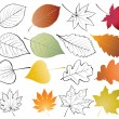 Stock Vector: Set of leaves