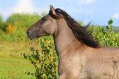 Horse running — Stock Photo