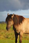 Koně a obloha — Stock fotografie