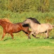 Stock Photo: Horses run