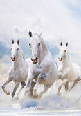 White horses in dust — Stock Photo