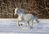 Bílý kůň — Stock fotografie