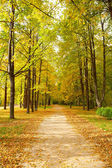 Alley in autumn park — Stock Photo