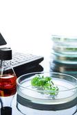Plants in Petri dish — Stock Photo