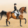 Equestrian sport - dressage - Stock Photo