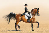 Equestrian sport - dressage — Stock Photo
