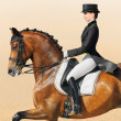 Equestrian sport - dressage, closeup - Stock Photo