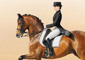 Equestrian sport - dressage, closeup — Stock Photo