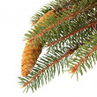 Stock Photo: Twig with fir cone