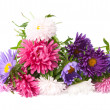 A bouquet of asters — Stock Photo