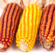 Ripe corn — Stock Photo