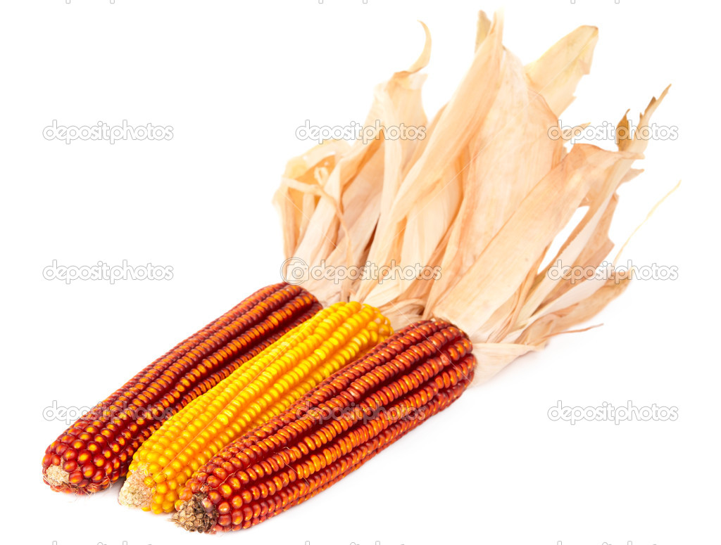 Ripe corn on a white background  Stock Photo #6884365