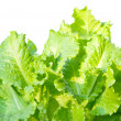 Lettuce leaves — Stockfoto