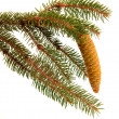 Twig with fir cone — Stock Photo #7205941