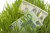 Green grass with the dollar and euro — Stock Photo