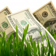 Green grass with the dollar — 图库照片