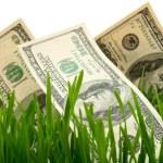 Zielona trawa z dolarem — Zdjęcie stockowe