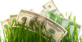 Green grass with the dollar and euro isolated — Stock Photo