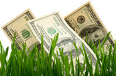 Green grass with the dollar — Stock Photo