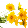 Yellow meadow flowers — Stockfoto #7571275