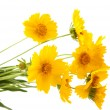 Yellow meadow flowers - Stock Photo