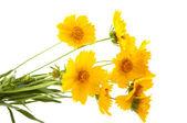 Gele weide bloemen — Stockfoto