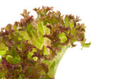 Lettuce leaf — Stock Photo