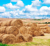 Landscape view of a farm field with gathered crops — Stock Photo