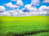 Field over cloudy blue sky — Stockfoto