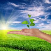 Mano che tiene la pianta verde — Foto Stock