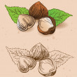 Hazelnuts in hand-drawn style — Stock Vector