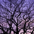 Purple sunset. - Stock Photo