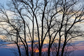 Tree silhouette at sunset. — Stock Photo
