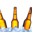 Bottles of beer on ice — Stock Photo
