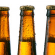 Neck of a beer bottle — Stock Photo