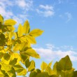 Autumn leaves against sky — Stock Photo #6880585