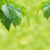 Fresh green background — Stockfoto