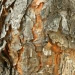 Pine-tree bark texture — Stock Photo #6802114