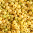 Berries of a white currant — Stock Photo
