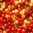 Berries of red and white currant — Stock Photo