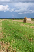 Round straw bales in the meadow — Stockfoto
