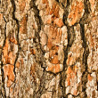 Close up view of wood — Stock Photo