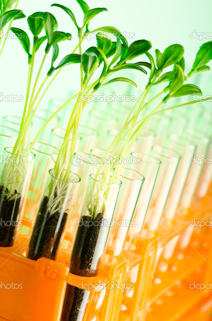 Experiment with green seedlings in the lab — Stock Photo #6819344
