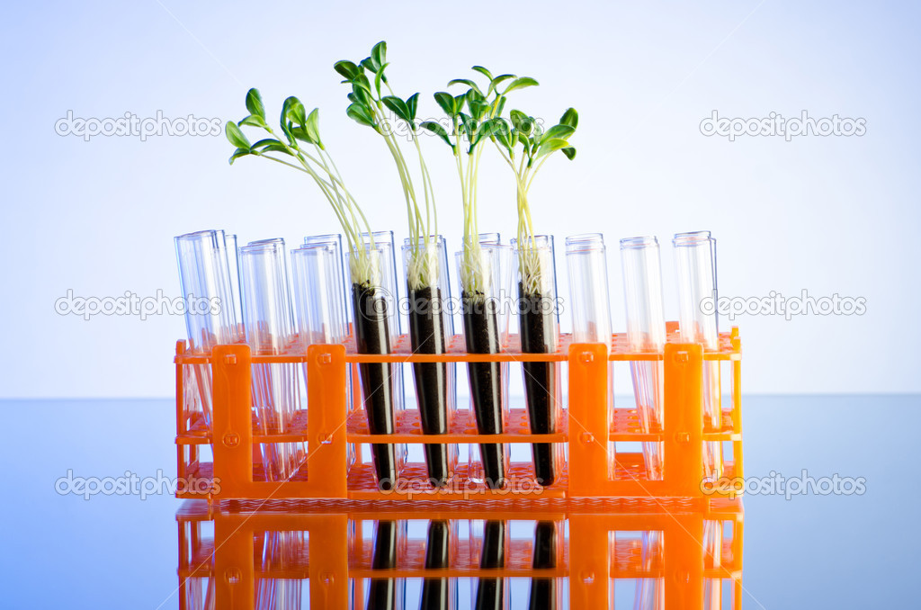 Experiment with green seedlings in the lab — Stock Photo #6819381
