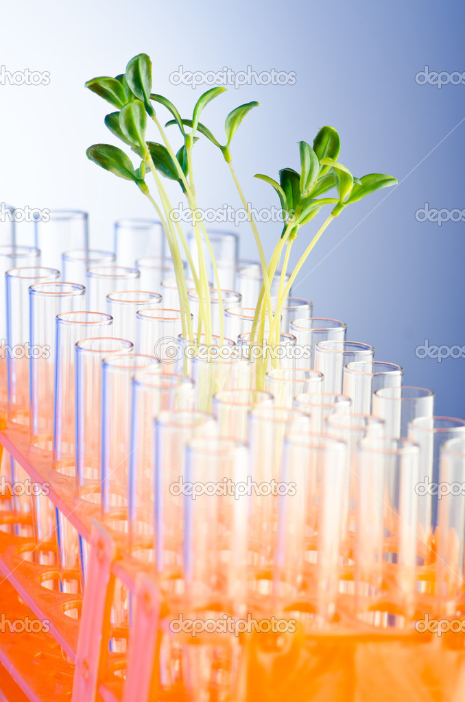 Experiment with green seedlings in the lab — Stock Photo #6819506