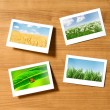 Nature photos in picture frames — Stock Photo