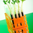 Experiment with green seedlings in the lab — Stock Photo #6844555