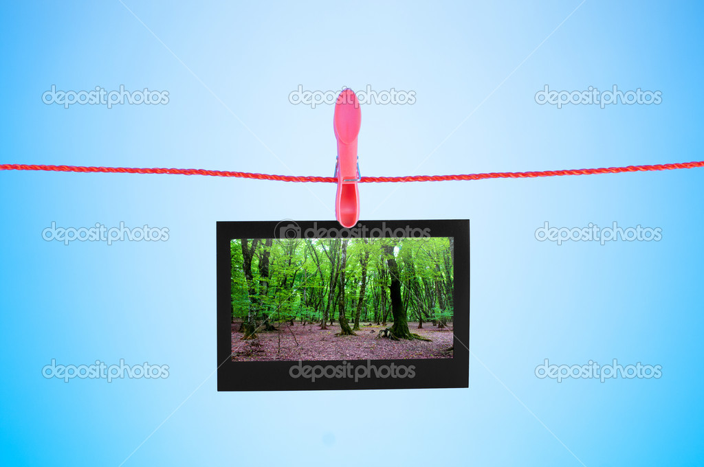 Picture frames with nature photos — Stock Photo #6842824