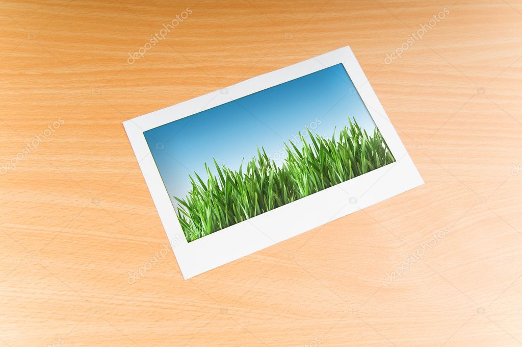 Green grass on the photo frame — Stock Photo #6842837