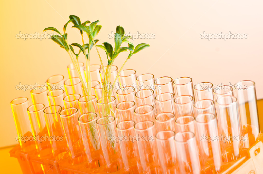 Experiment with green seedlings in the lab — Stock Photo #6844240